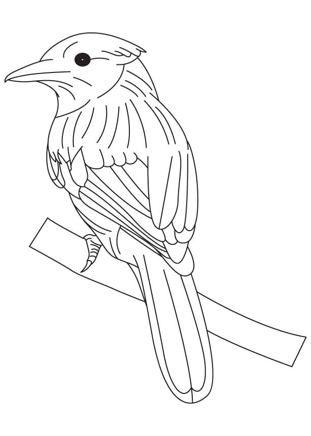 Singing bluebird coloring page download free singing for Blue bird coloring pages