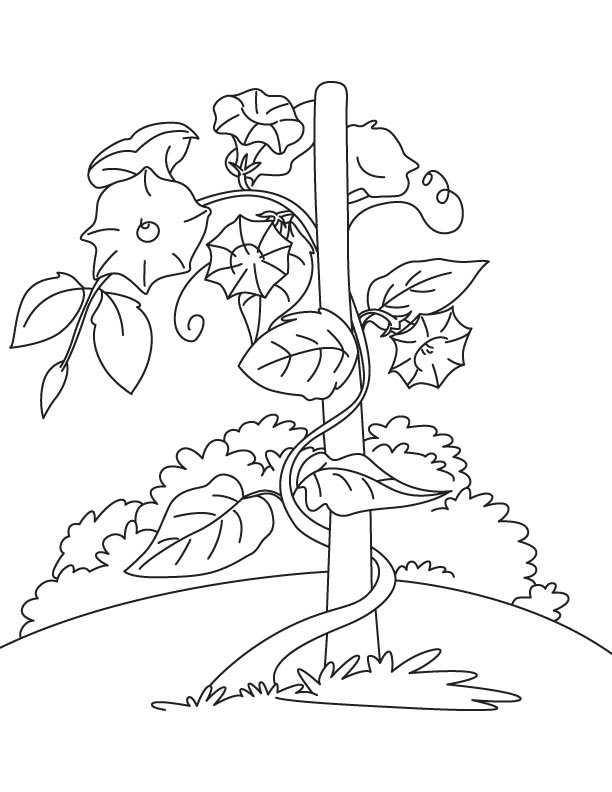 vine and branches coloring page - vine coloring patterns coloring pages