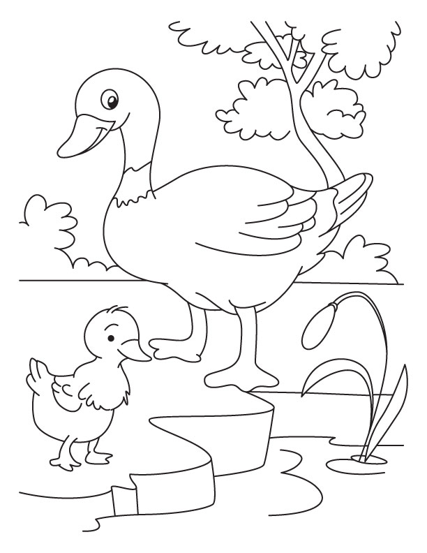 Duck And Duckling Coloring Pages Www Pixshark Com Duckling Coloring Page