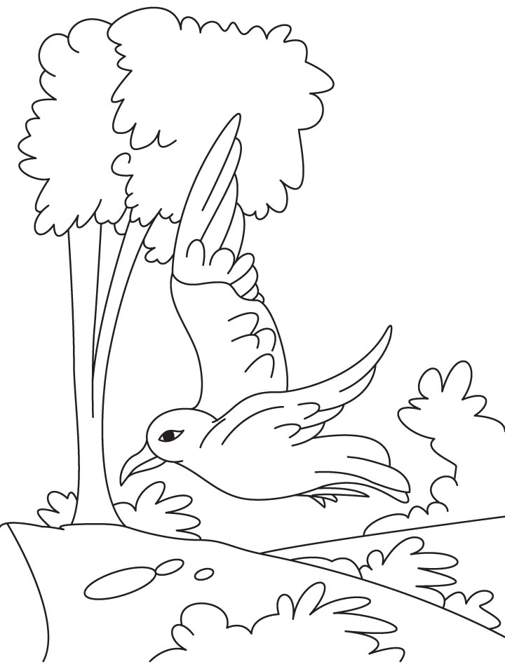 seagull in flight coloring pages - photo#9