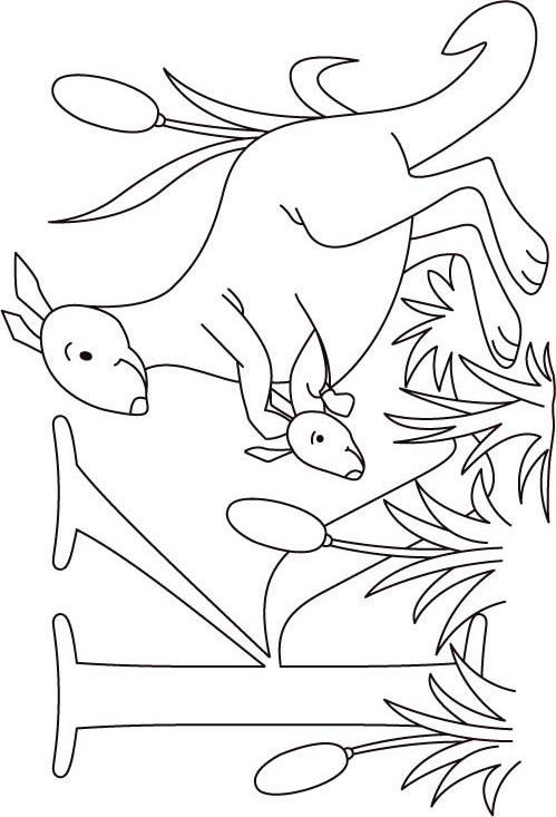 k for kangaroo coloring pages - photo#10