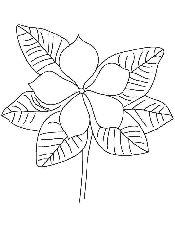 Purple periwinkle coloring page