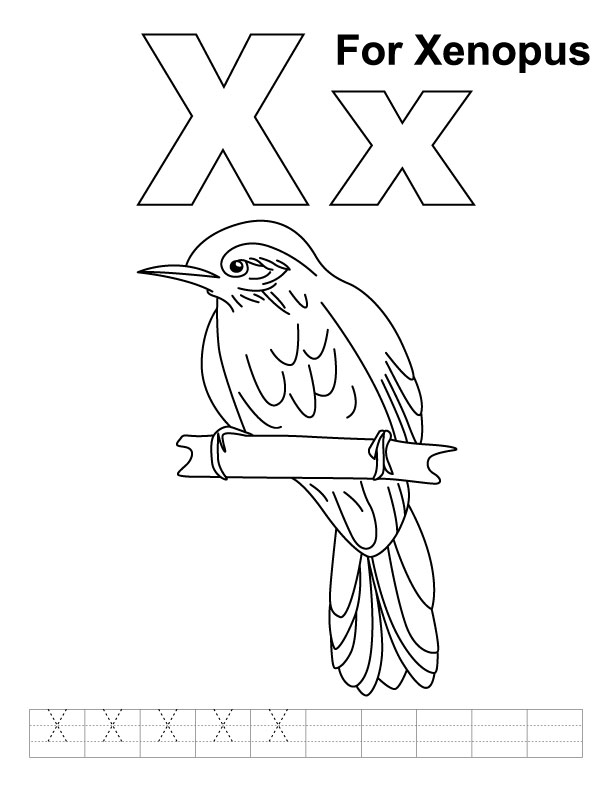 Xiphias Coloring Page X for xenopus c...
